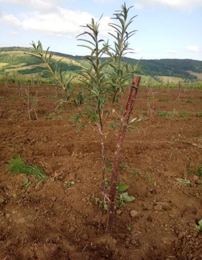 catina-ecologica-arbust