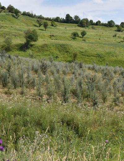 catina-ecologica-plantatie