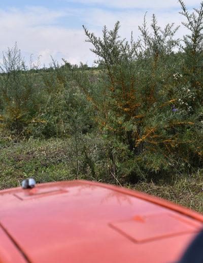exploareaza-plantatia-de-catina-ecologica-cu-tractorasul