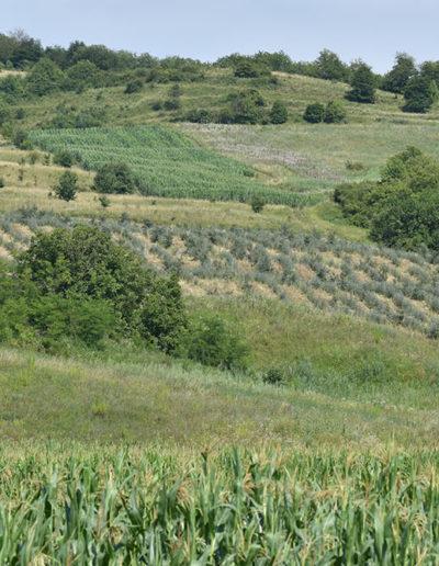 plantatia-bdk-catina-bio