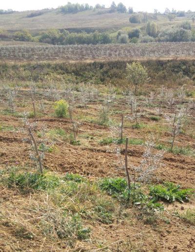 plantatie-catina-bio-eco