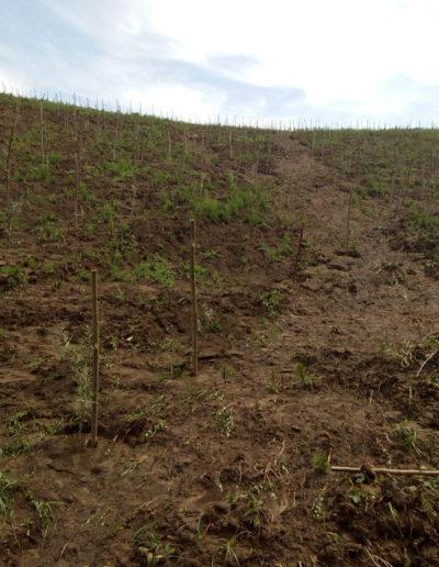 plantatie-catina-ecologica
