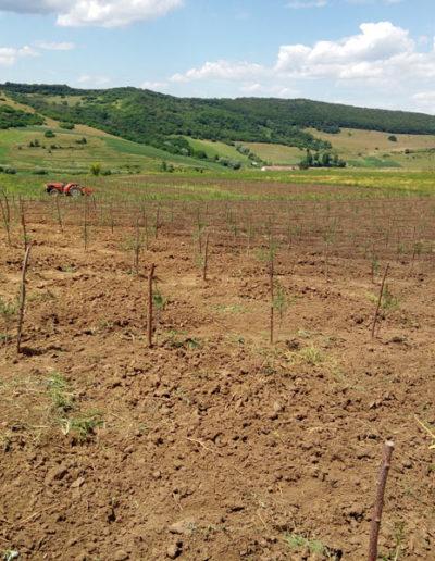 plantatie-catina-ecologica-plimbari-cu-tractorasul