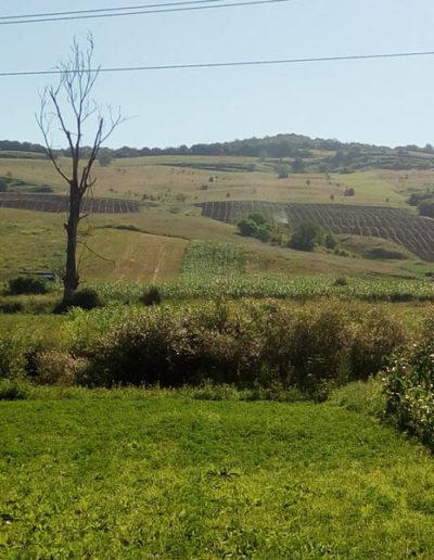 plantatie-catina-judetul-mures
